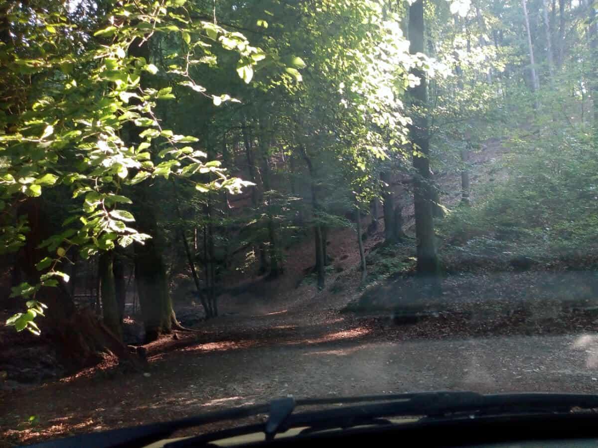 Wald in Bielefeld